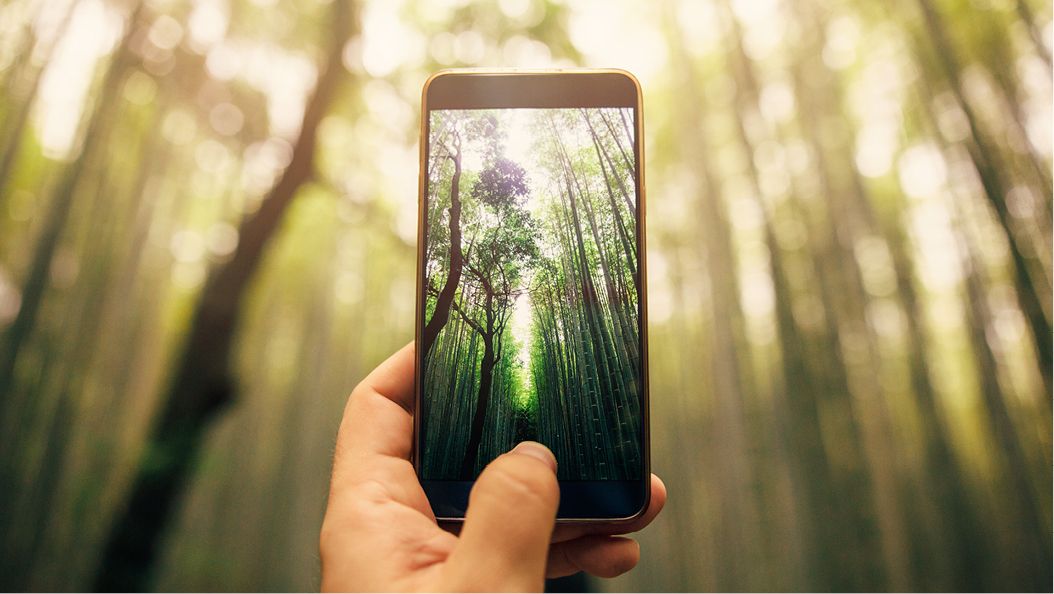 hand holding a smartphone, taking a picture of trees